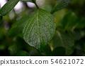 Wet leaves 54621072