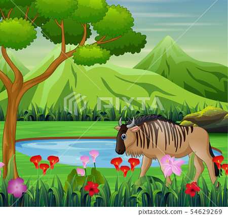 Bison animal cartoon in the beautiful natural 54629269