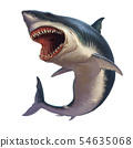 Great White Shark Body realistic isolated. 54635068