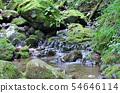 Mitakeyama rock garden 54646114