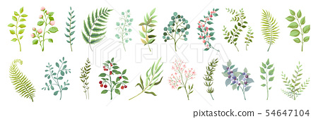 Botanic elements. Trendy wild flowers and branches, plants and leaves green collection. Vector 54647104