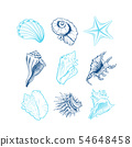 Seashells freehand vector illustrations set 54648458