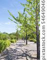 Row of trees park trees blue sky clear shadow 54649046