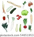 蔬菜品种 54651953
