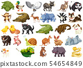 Set of animal character 54654849
