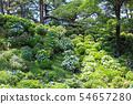 오다 와라 성지 공원의 수국 23 54657280