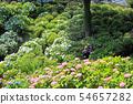 오다 와라 성지 공원의 수국 25 54657282
