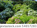 오다 와라 성지 공원의 수국 26 54657283