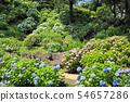 오다 와라 성지 공원의 수국 28 54657286