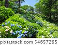 오다 와라 성지 공원의 수국 32 54657295