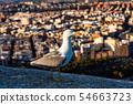 Seagull on the walls of Santa Barbara Castle in Alicante, Spain 54663723