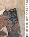 Deadly scorpions who have turned their claws and l 54664738