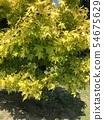 leaf 54675629