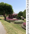 Park flowers 54675630