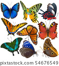 Butterfly colorful insect flying for decoration and beautiful butterflies wings fly in spring 54676549