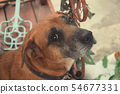 Dog Looks In The Eyes Of The Owner 54677331