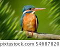 Superb portrait in jungle 54687820
