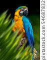 Parrot portrait in jungle 54687832