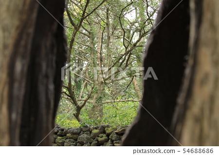비자림,숲속,산책길,피톤치드, 54688686