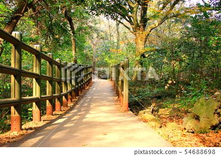 비자림,숲속,산책길,피톤치드, 54688698