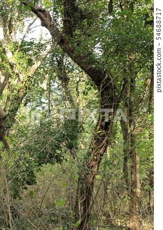 비자림,숲속,산책길,피톤치드, 54688717