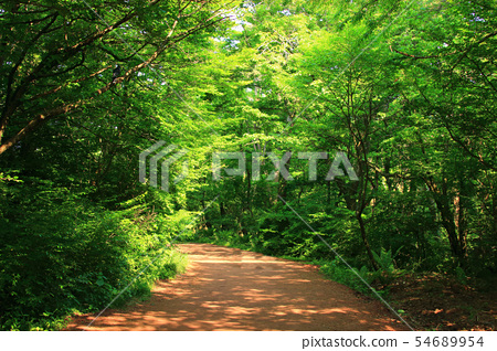 사려니숲길,숲숙,산책길,산림, 54689954