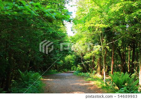 사려니숲길,숲숙,산책길,산림, 54689983