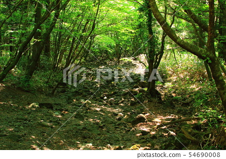 사려니숲길,숲숙,산책길,산림, 54690008