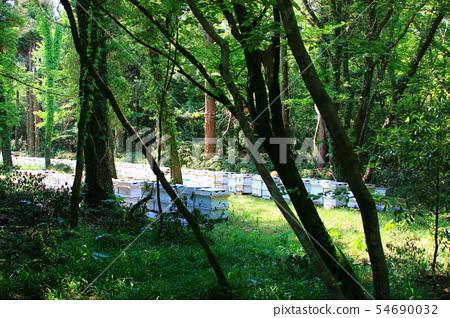 양봉,벌통,사려니숲길,숲숙,산책길,산림, 54690032