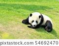 와카야마 현 팬더 아기 54692470