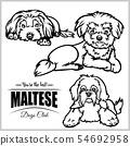 Maltese - vector set isolated illustration on white background 54692958