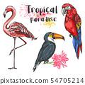 Set of tropical birds 54705214