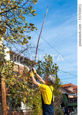 Man punching autumn leaves from the tree 54708851