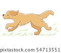 一只狗在草地上运行的插图(金毛猎犬) 54713551