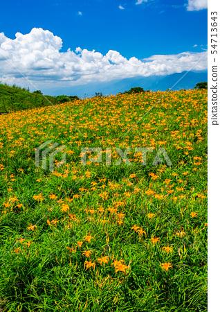 台灣花蓮富里六十石山金針花海Asia Taiwan Hualien Mountains 54713643