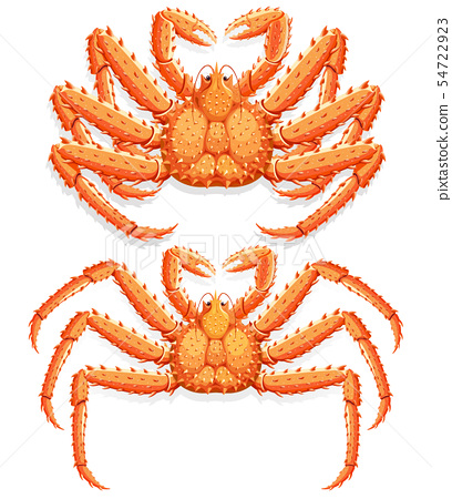 Alaskan king crab. Vector illustration. 54722923