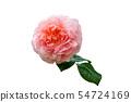 장미 꽃 54724169