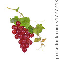Red grapes with drop of water isolated  54727243