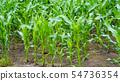 옥수수 밭 16 : 9 54736354
