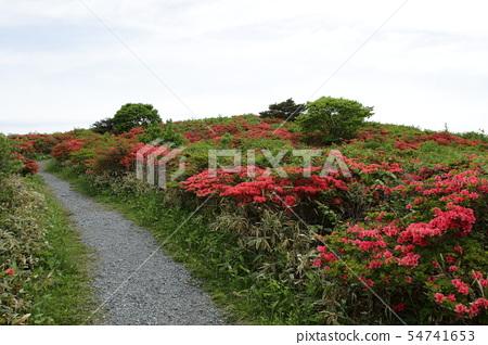 Azalea of Mount Murone 54741653
