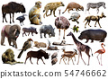 Birds, mammal and other animals of Africa isolated 54746662