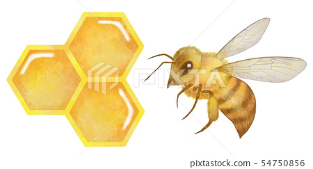 Bee bee bee beehive beehive watercolor style soft touch 54750856