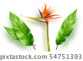 Strelitzia reginae, bird of paradise vector 54751393