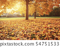 Sunny autumn maples in the park 54751533