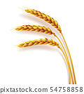 Realistic ears of wheat isolated, agriculture, natural product 54758858