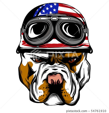 Vector face of bulldog biker with helmet. Motorcycle rider illustration. Shirt graphics. Isolated on 54761910
