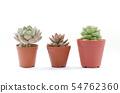 Mini Succulent Plant Pot White Background 54762360