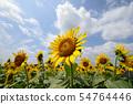 Original sunflower on blue sky 54764446
