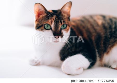 Cat folding hand 54778056