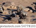 케이프 크로스의 바다 표범 아기 baby seal in Cape cross 54778103